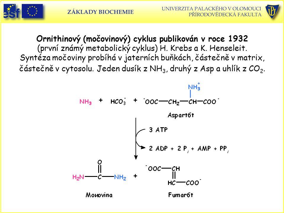 Ornithinový (močovinový) cyklus publikován v roce 1932 (první známý metabolický cyklus) H. Krebs a K. Henseleit. Syntéza močoviny probíhá v jaterních buňkách, částečně v matrix, částečně v cytosolu. Jeden dusík z NH3, druhý z Asp a uhlík z CO2.