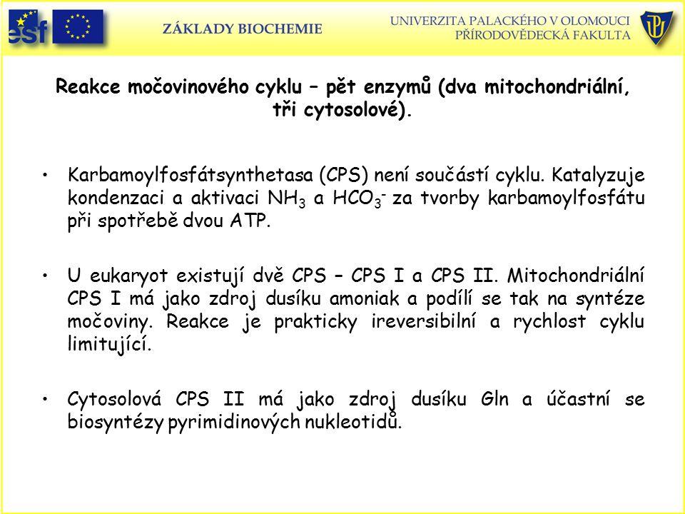 Reakce močovinového cyklu – pět enzymů (dva mitochondriální, tři cytosolové).