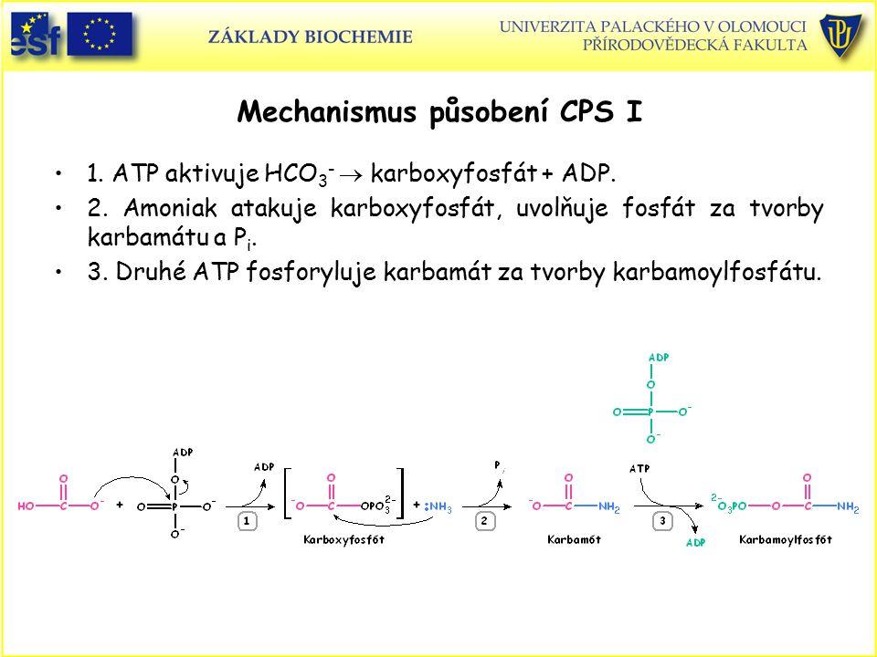 Mechanismus působení CPS I