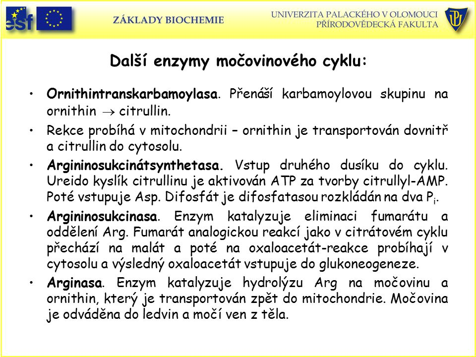 Další enzymy močovinového cyklu: