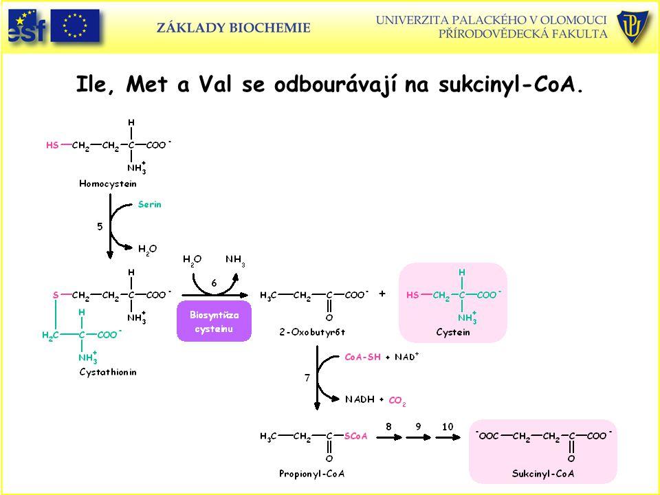 Ile, Met a Val se odbourávají na sukcinyl-CoA.