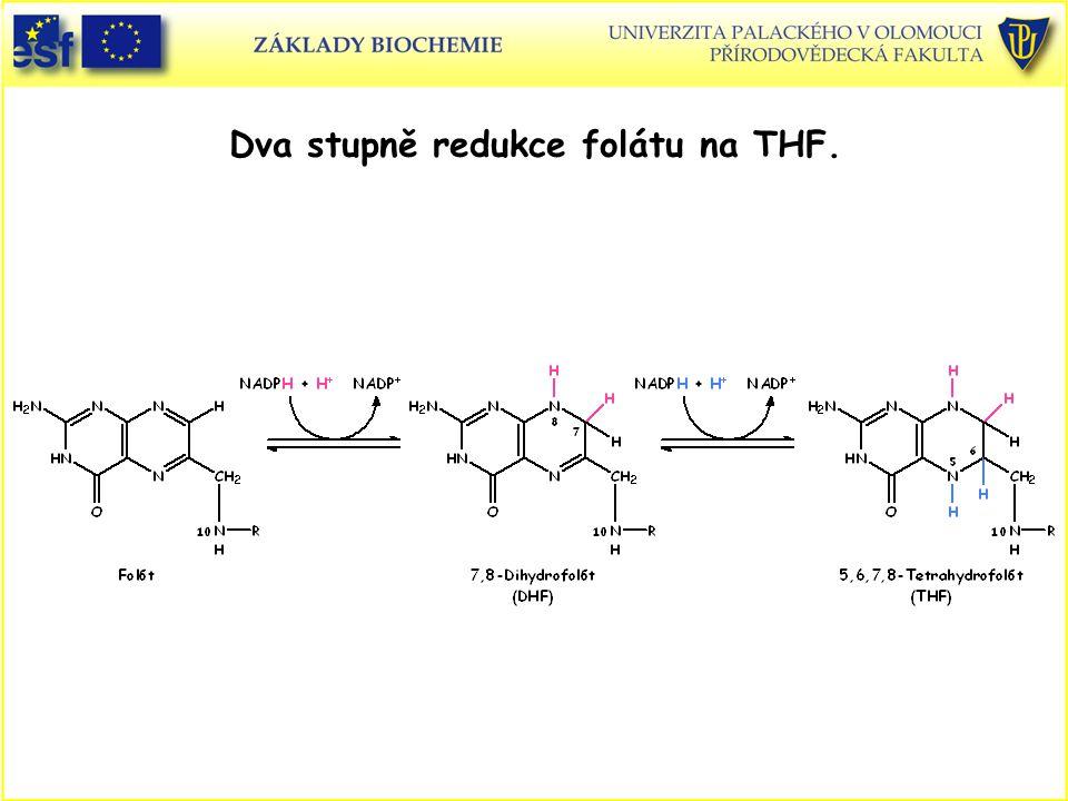 Dva stupně redukce folátu na THF.