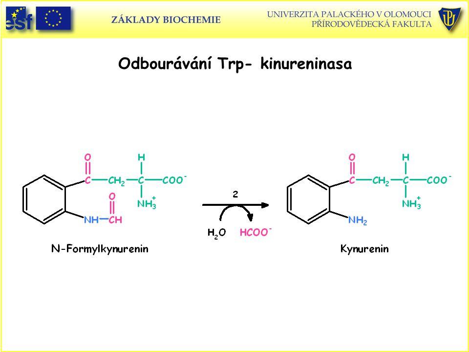 Odbourávání Trp- kinureninasa