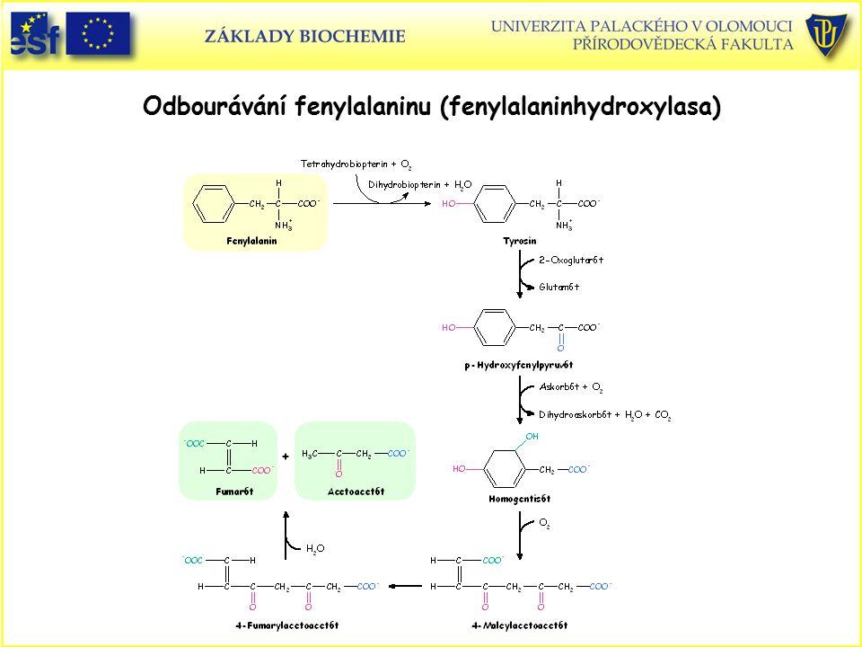 Odbourávání fenylalaninu (fenylalaninhydroxylasa)