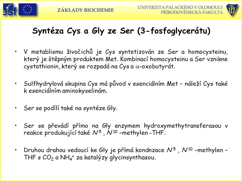 Syntéza Cys a Gly ze Ser (3-fosfoglycerátu)