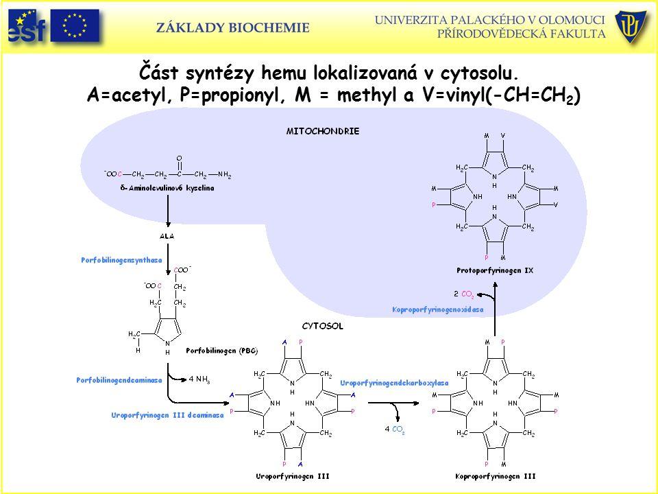 Část syntézy hemu lokalizovaná v cytosolu