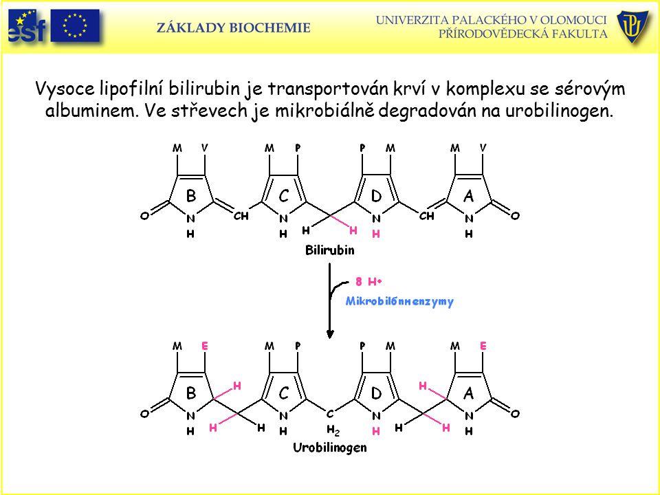 Vysoce lipofilní bilirubin je transportován krví v komplexu se sérovým albuminem. Ve střevech je mikrobiálně degradován na urobilinogen.