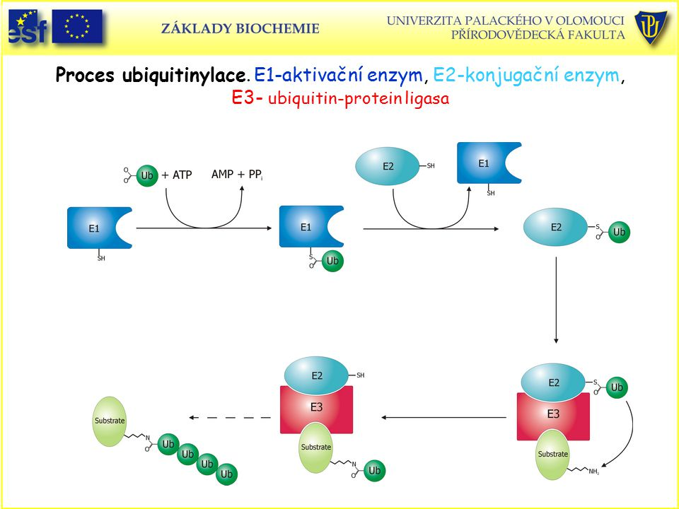Proces ubiquitinylace