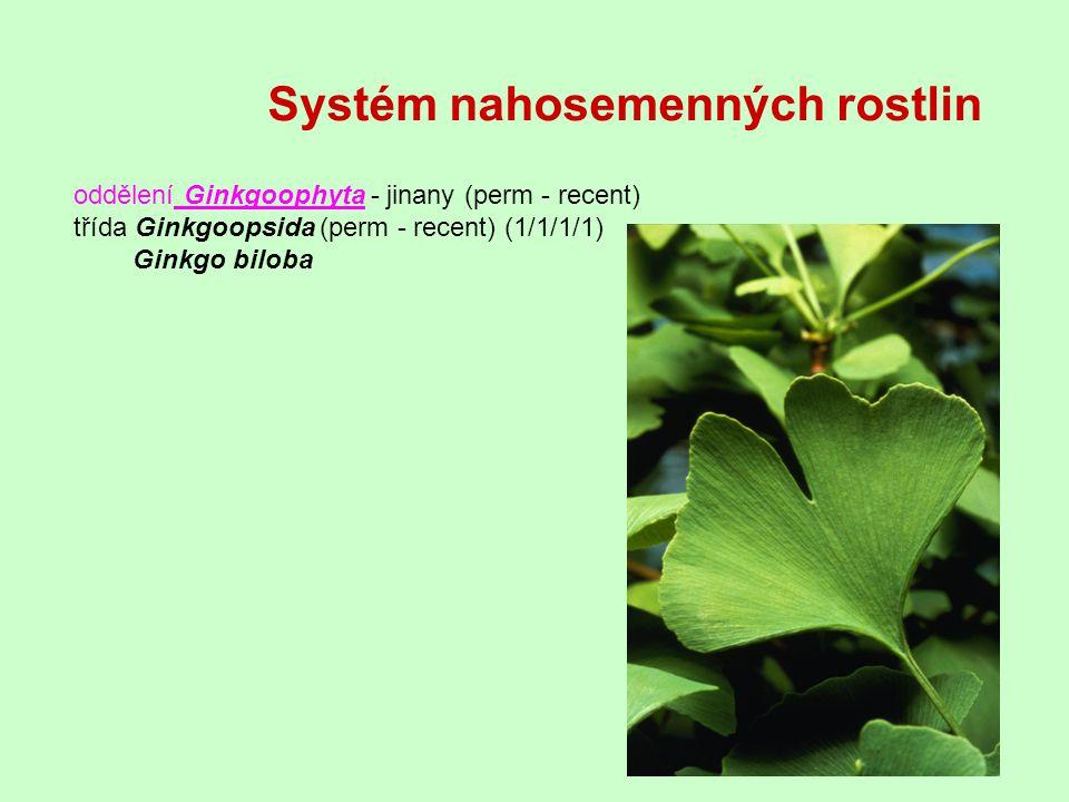 Systém nahosemenných rostlin