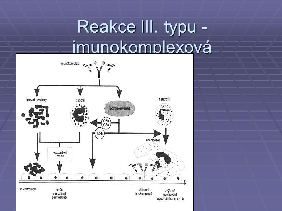 Reakce III. typu -imunokomplexová