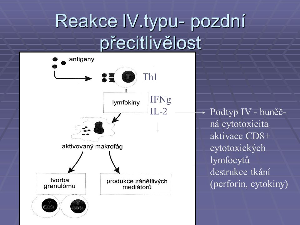 Reakce IV.typu- pozdní přecitlivělost