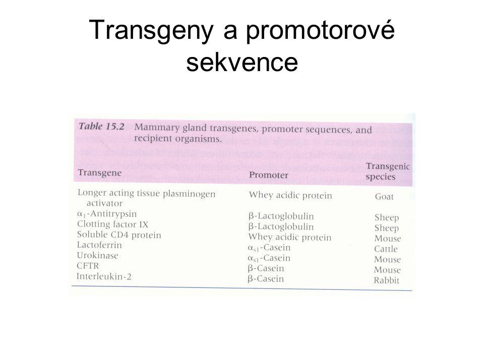 Transgeny a promotorové sekvence