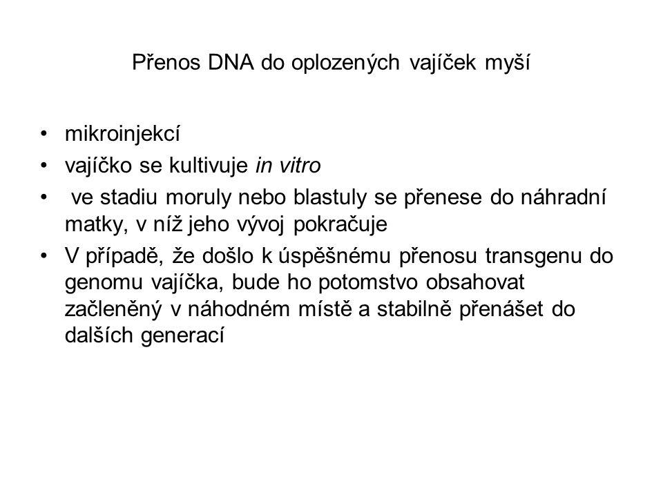 Přenos DNA do oplozených vajíček myší