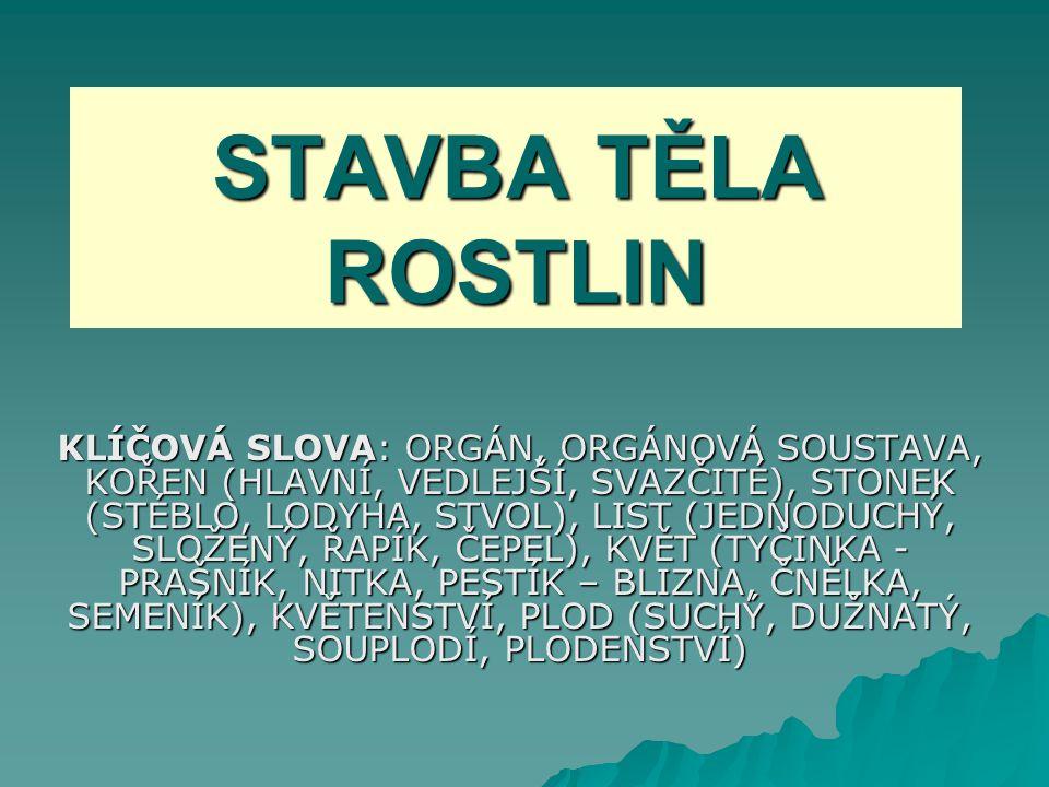 STAVBA TĚLA ROSTLIN