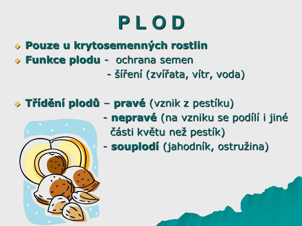 P L O D Pouze u krytosemenných rostlin Funkce plodu - ochrana semen