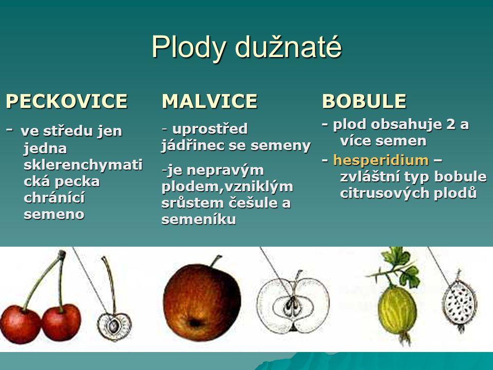 Plody dužnaté PECKOVICE