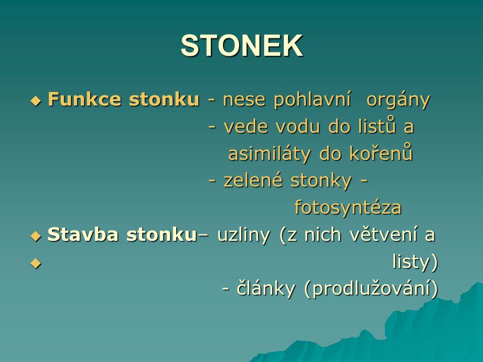 STONEK Funkce stonku - nese pohlavní orgány - vede vodu do listů a