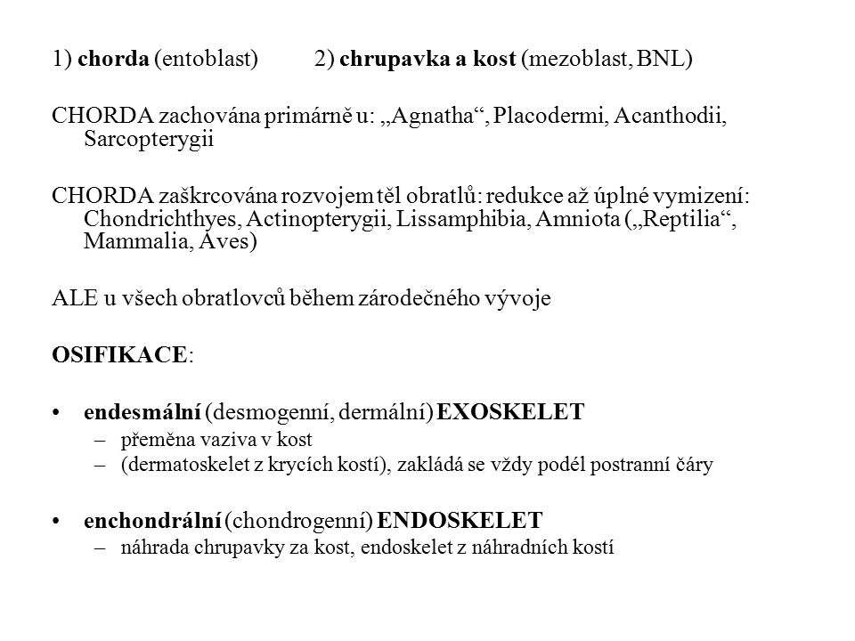 1) chorda (entoblast) 2) chrupavka a kost (mezoblast, BNL)