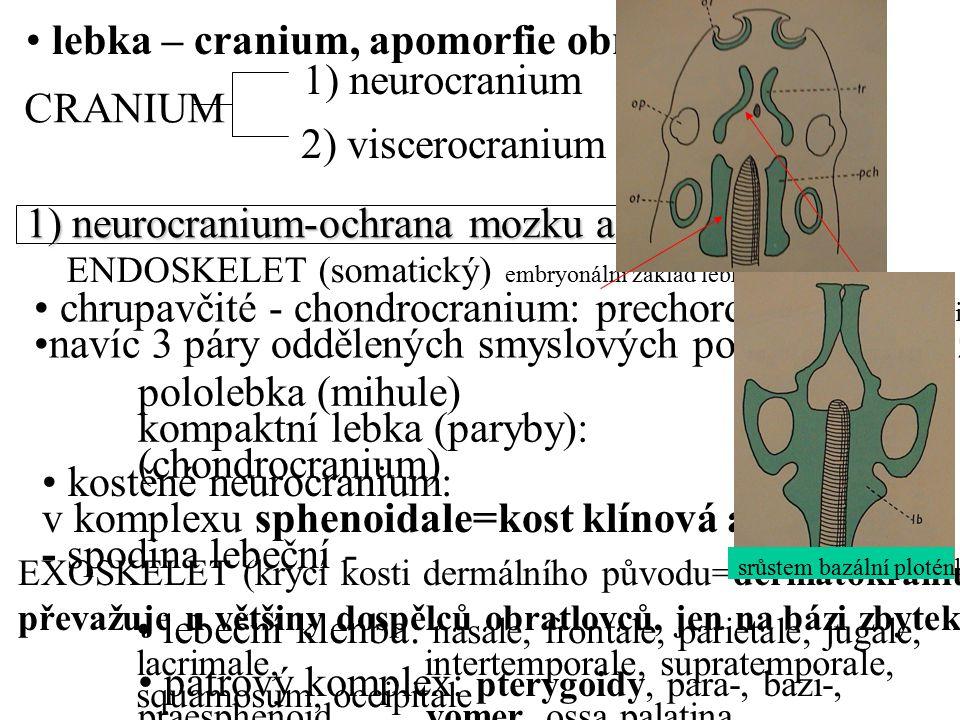 lebka – cranium, apomorfie obratlovců