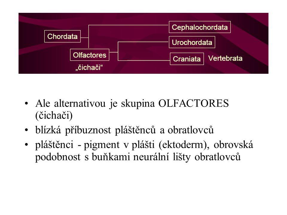 Ale alternativou je skupina OLFACTORES (čichači)