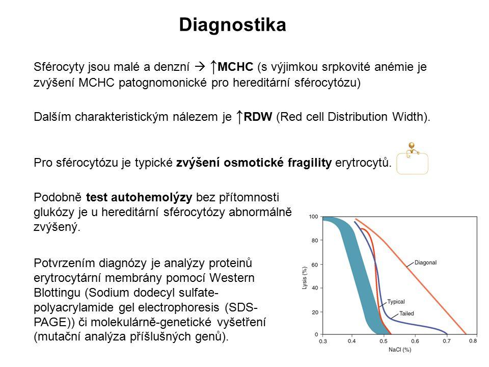 Diagnostika Sférocyty jsou malé a denzní  ↑MCHC (s výjimkou srpkovité anémie je zvýšení MCHC patognomonické pro hereditární sférocytózu)