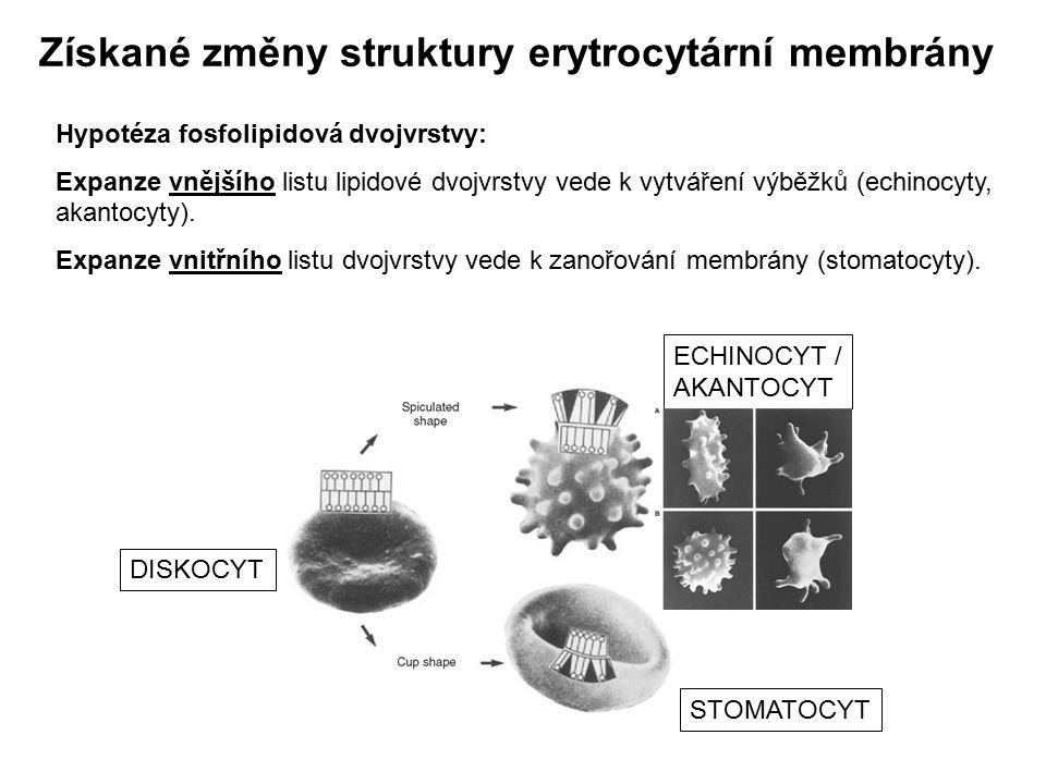 Získané změny struktury erytrocytární membrány