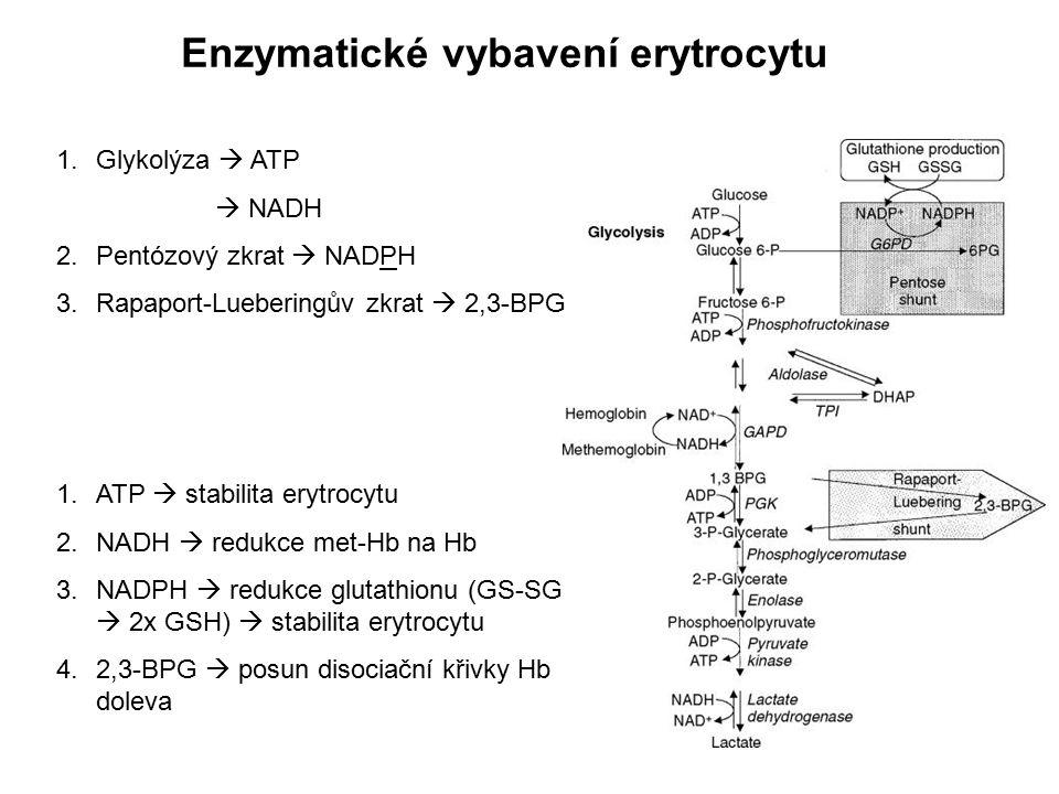 Enzymatické vybavení erytrocytu