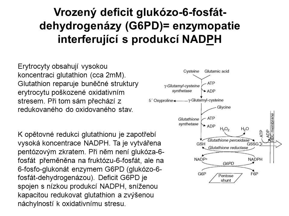 Vrozený deficit glukózo-6-fosfát-dehydrogenázy (G6PD)= enzymopatie interferující s produkcí NADPH