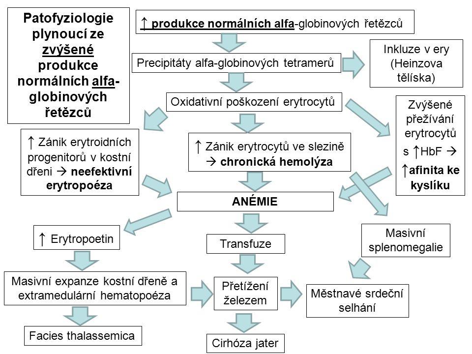 ↑ produkce normálních alfa-globinových řetězců