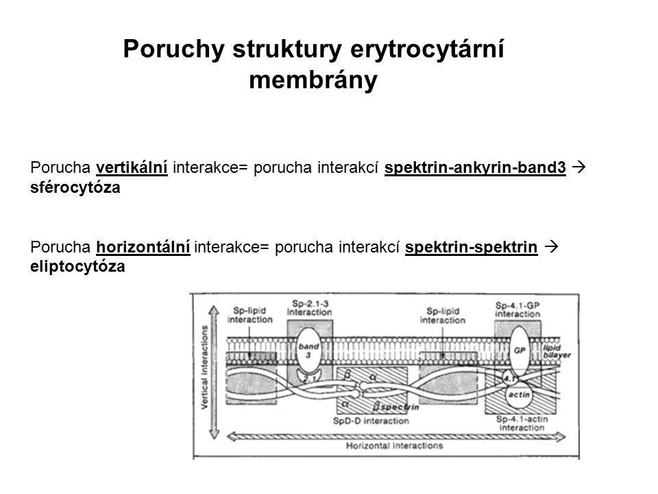 Poruchy struktury erytrocytární membrány