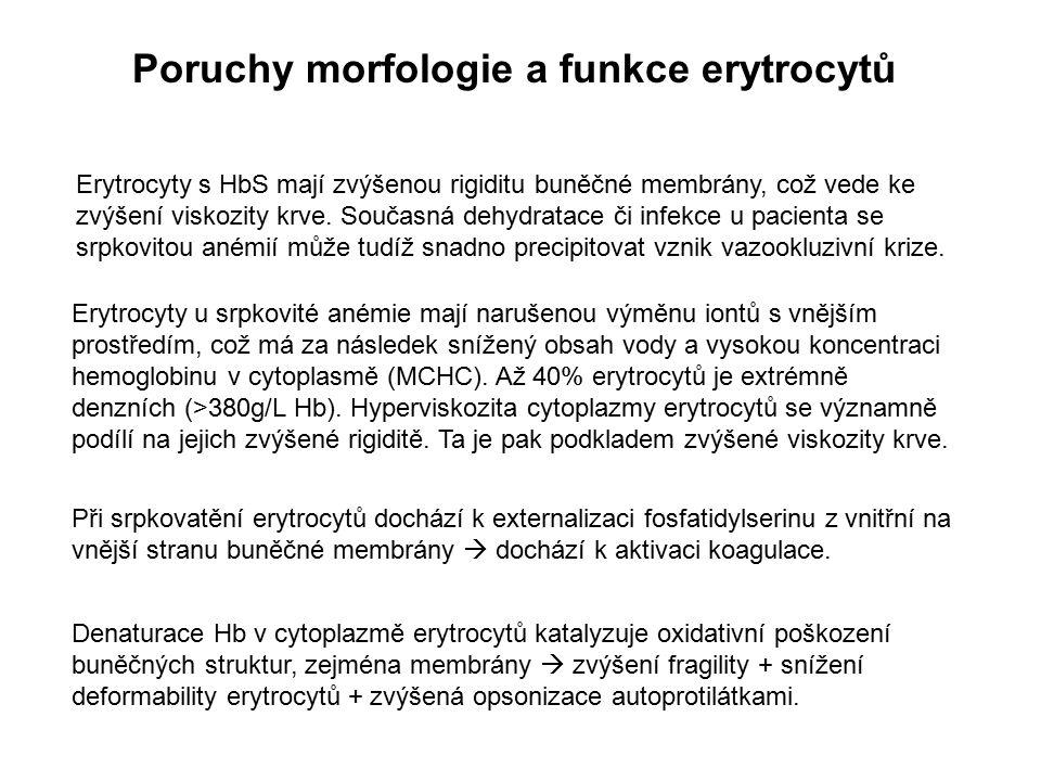 Poruchy morfologie a funkce erytrocytů