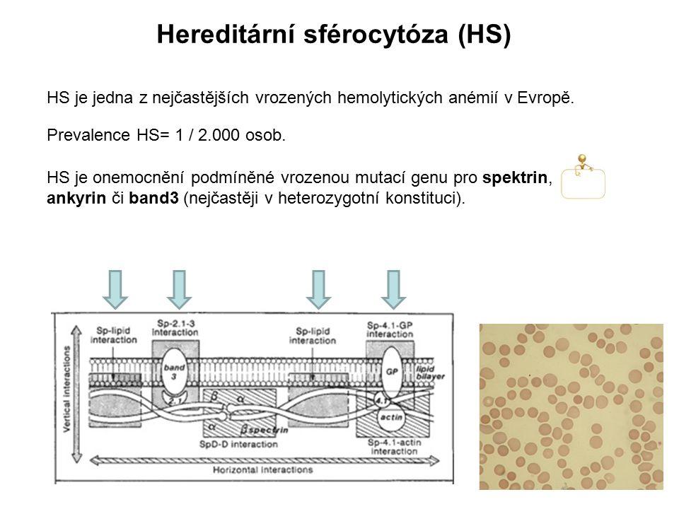 Hereditární sférocytóza (HS)