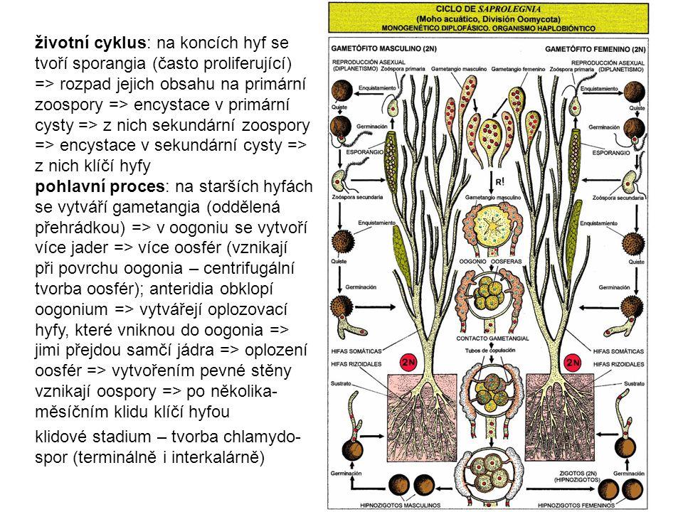 životní cyklus: na koncích hyf se tvoří sporangia (často proliferující) => rozpad jejich obsahu na primární zoospory => encystace v primární cysty => z nich sekundární zoospory => encystace v sekundární cysty => z nich klíčí hyfy pohlavní proces: na starších hyfách se vytváří gametangia (oddělená přehrádkou) => v oogoniu se vytvoří více jader => více oosfér (vznikají při povrchu oogonia – centrifugální tvorba oosfér); anteridia obklopí oogonium => vytvářejí oplozovací hyfy, které vniknou do oogonia => jimi přejdou samčí jádra => oplození oosfér => vytvořením pevné stěny vznikají oospory => po několika-měsíčním klidu klíčí hyfou