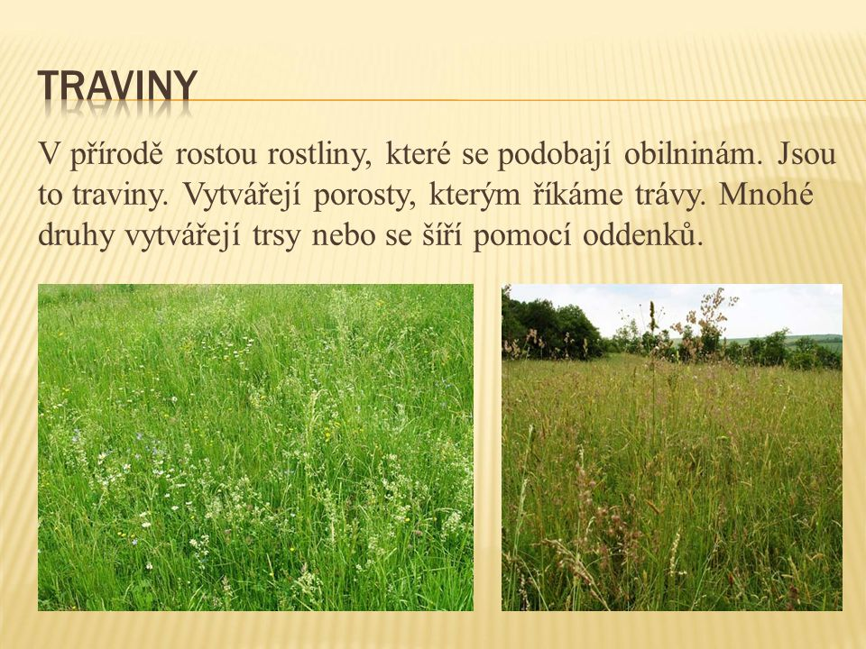 Traviny