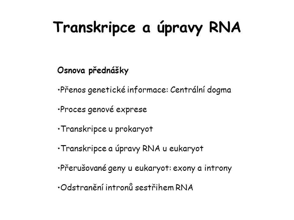 Transkripce a úpravy RNA