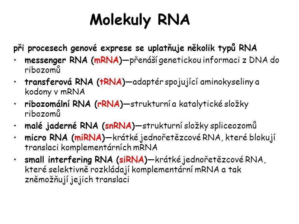 Molekuly RNA při procesech genové exprese se uplatňuje několik typů RNA. messenger RNA (mRNA)—přenáší genetickou informaci z DNA do ribozomů.