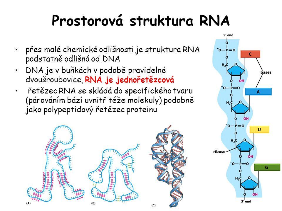 Prostorová struktura RNA