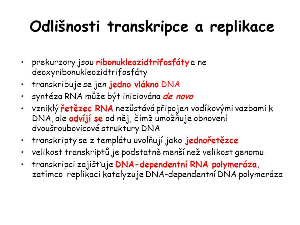 Odlišnosti transkripce a replikace