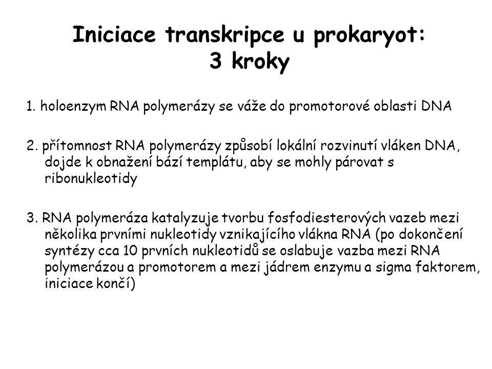 Iniciace transkripce u prokaryot: 3 kroky