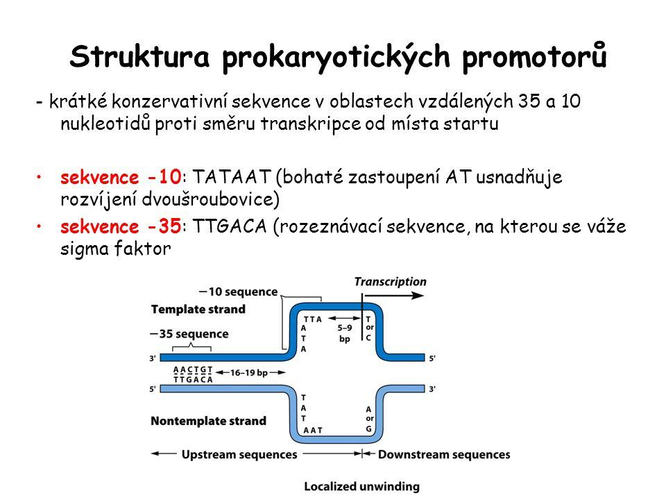 Struktura prokaryotických promotorů
