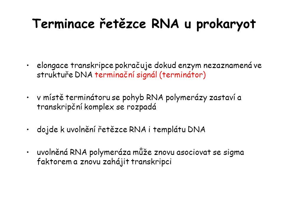 Terminace řetězce RNA u prokaryot