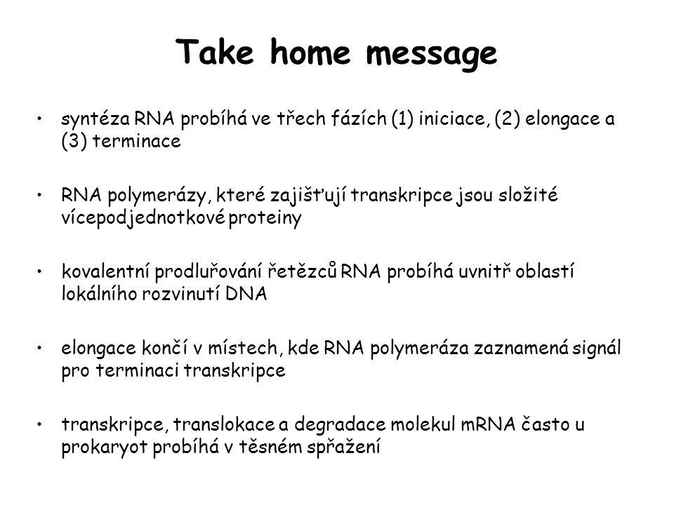 Take home message syntéza RNA probíhá ve třech fázích (1) iniciace, (2) elongace a (3) terminace.