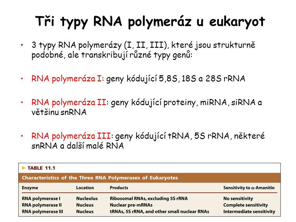 Tři typy RNA polymeráz u eukaryot