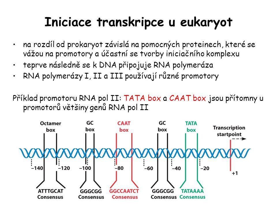 Iniciace transkripce u eukaryot