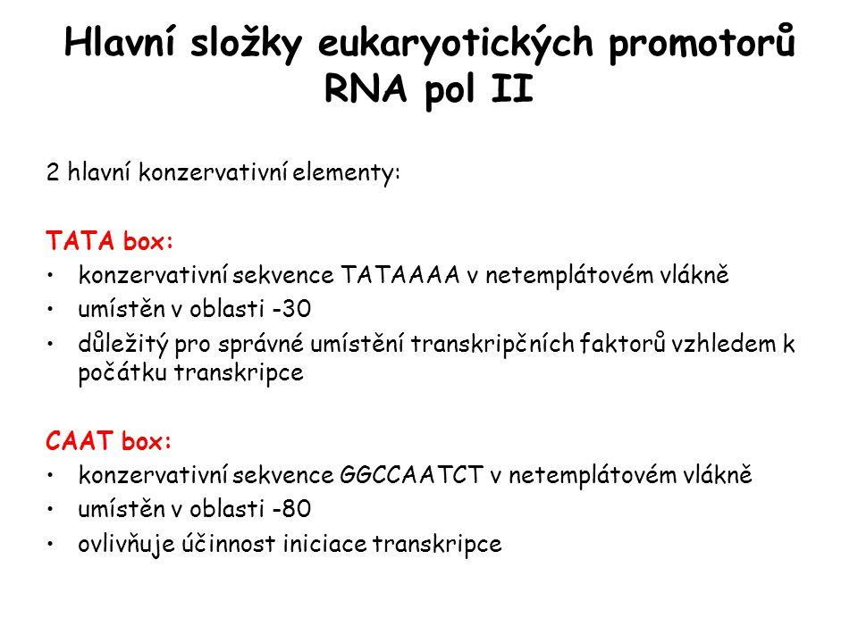 Hlavní složky eukaryotických promotorů RNA pol II