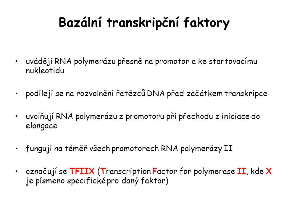 Bazální transkripční faktory