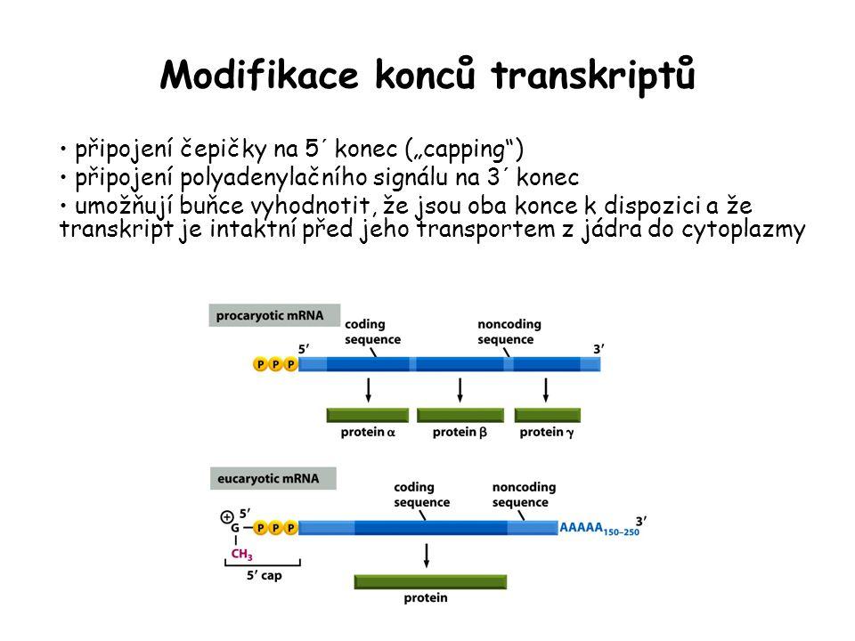 Modifikace konců transkriptů