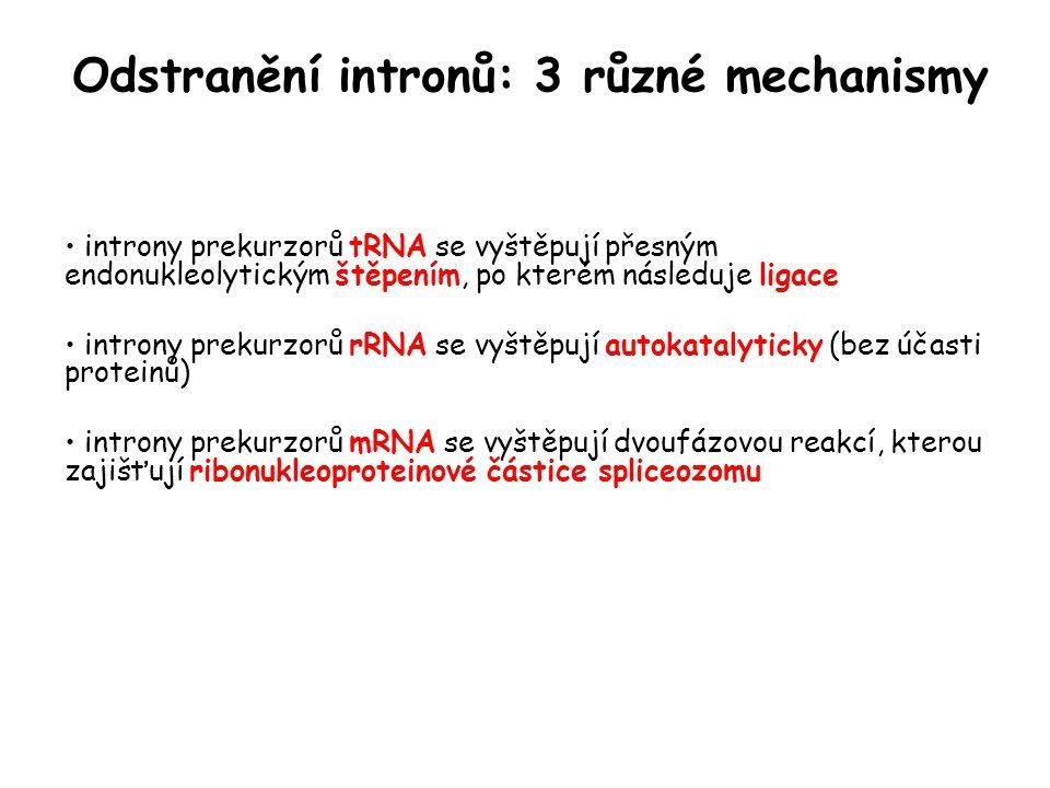 Odstranění intronů: 3 různé mechanismy