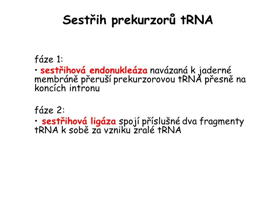 Sestřih prekurzorů tRNA