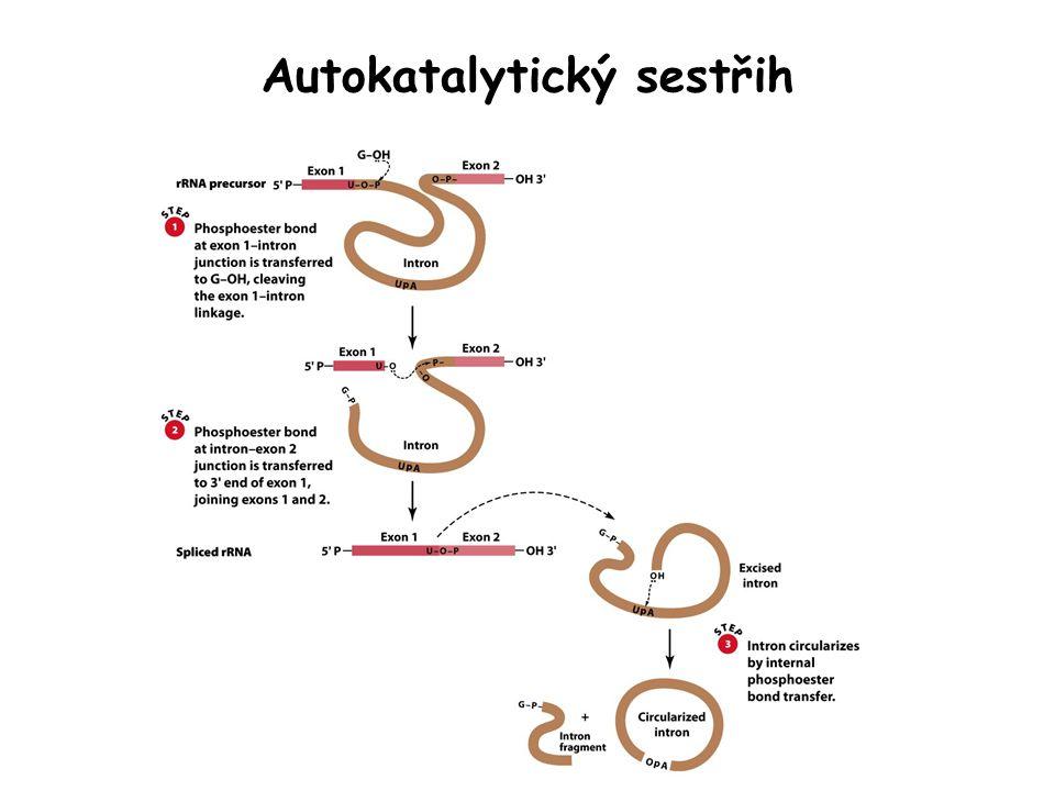 Autokatalytický sestřih